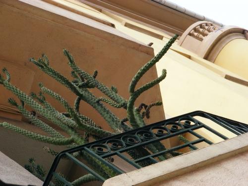 oeil, cactus