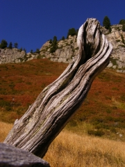bois mort, montagne, automne