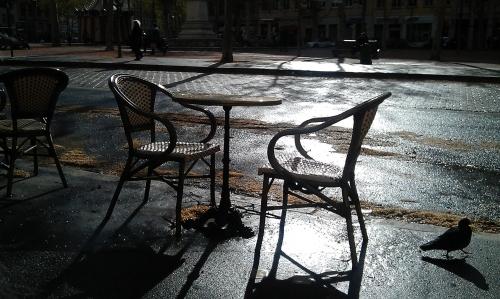 table, pigeon, enthousiasme