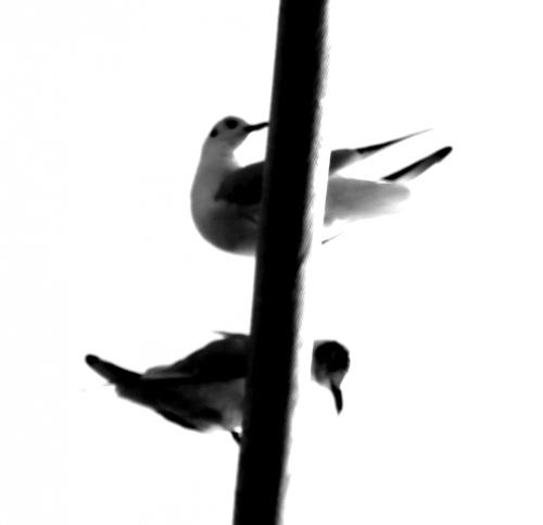 oiseaux sur un fil